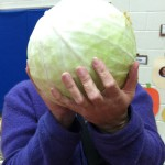 BIG cabbage